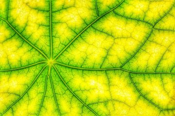 Green Plant Cell in Detail